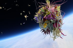 Flowers In Space