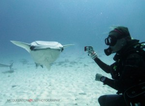 Remora photobombing, Bull Shark Dive. c/ MC Queenton.